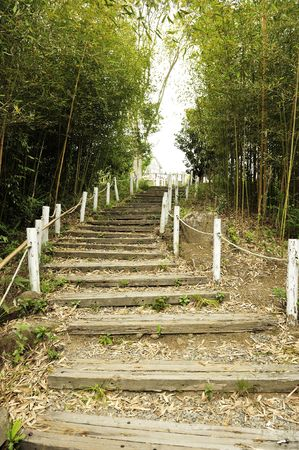steps in the bamboo forest