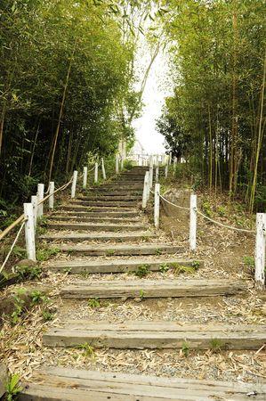 �tapes de la for�t de bambou