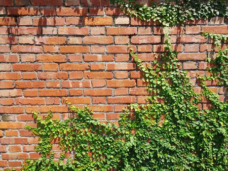 VID: hierba en la pared de ladrillo