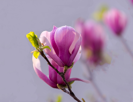 Close-up of flower blossoms on tree Stock Photo