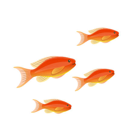 Cartoon anthias on a white background. Vector illustration