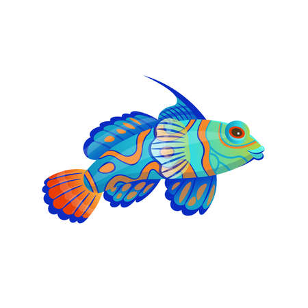 Cartoon a mandarin fish on a white background. Vector illustration. 矢量图像
