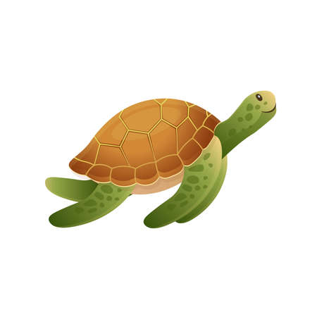 Cartoon a turtle on a white background. Vector illustration