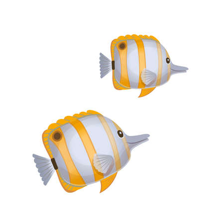 Cartoon copperband butterfly fish on a white background. Vector illustration 矢量图像