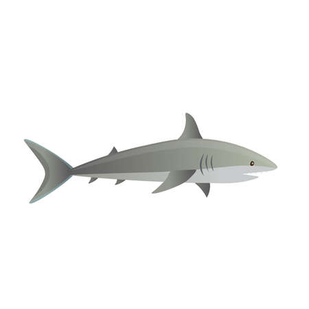 Cartoon shark on a white background. Vector illustration