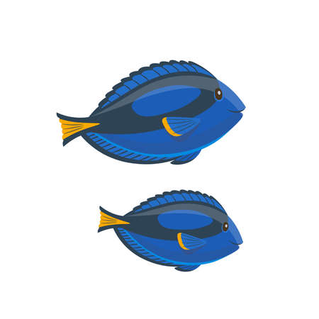 Cartoon surgeonfish, blue tang on a white background. Vector illustration
