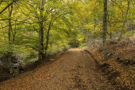 Tejera Negra Beech Forest Nature Park. Guadalajara, Spain