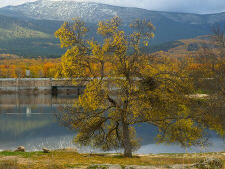 Tree with yellow leaves near the a pond in front of a majestic mountains in autumn 版權商用圖片