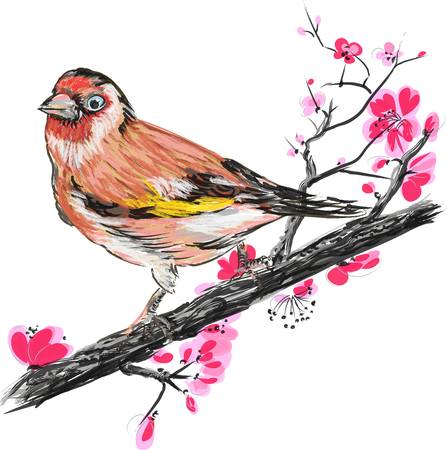 spring in japan: Goldfinch bird on a blossom branch sakura. Vector illustration. Illustration