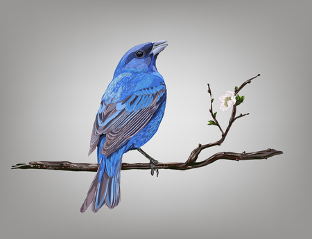 Realistic bird Blue Rock-Thrush on a branch of a blossoming tree, vector illustration