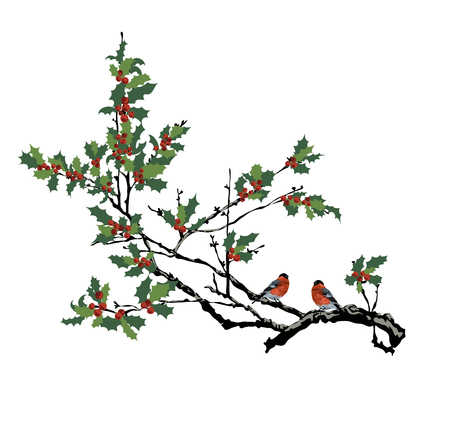Bullfinches on a branch of a holly.