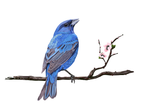 Blue bird on a cherry branch. Realistic sakura blossom - Japanese cherry tree isolated on white background. Cherry Blossom. Illustration