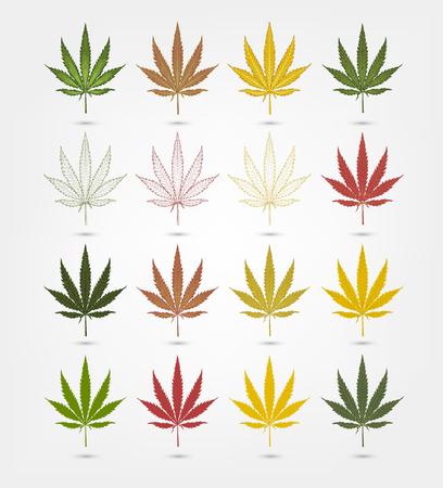 Big set of realistic marijuana leaf. Cannabis plant. Isolated on white background