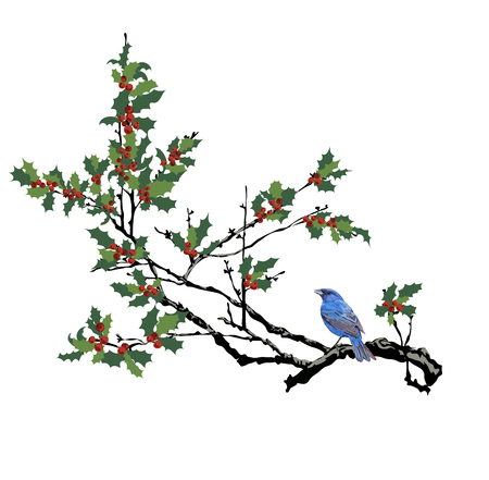 The holly tree with the blue bird. Isolated holly tree branch Banco de Imagens - 122213372