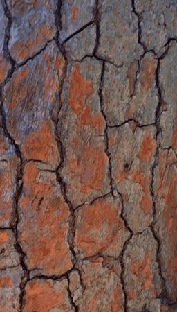Realistic wooden tree bark background. Vector Ilustração Vetorial