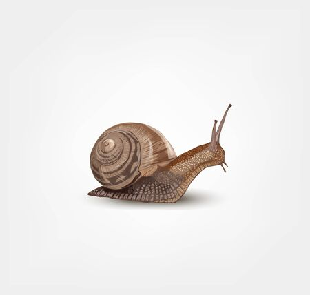 Realistic snail isolated on white background - vector illustration Illusztráció