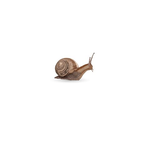 Realistic snail isolated on white background - vector illustration  イラスト・ベクター素材