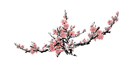 Cherry blossom event template with hand drawn branch with pink cherry flowers blooming. Realistic sakura blossom - Japanese cherry tree. Chinese or Japanese traditional drawing - Vector illustration Ilustracja