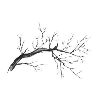 Bare branch isolated vector silhouette graphics. Close up of dry branch. Vector illustration. Vector Illustratie