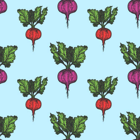 Table beet seamless pattern hand drawn background on blue. Vintage background. Vector