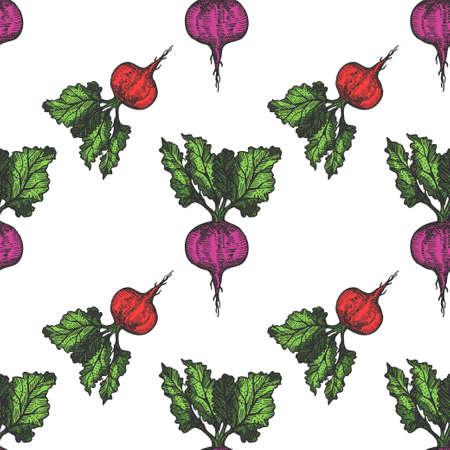 Table beet seamless pattern hand drawn background. Vintage background. Vector Vektoros illusztráció
