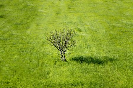 kayakoy: Tree with green grass Stock Photo