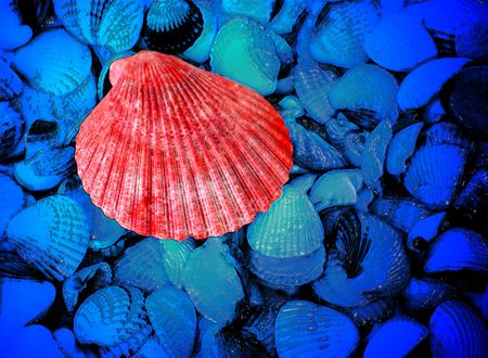 red and blue sea shells as background photo
