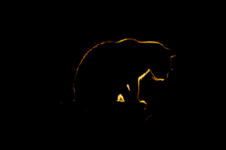 silhouette of the cat on the roof with light from the side Stock Photo