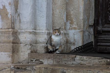 rigidity: Church cat