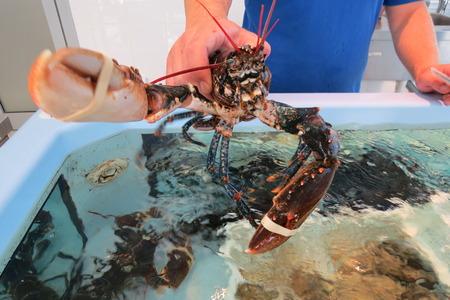 Lobster (omar)