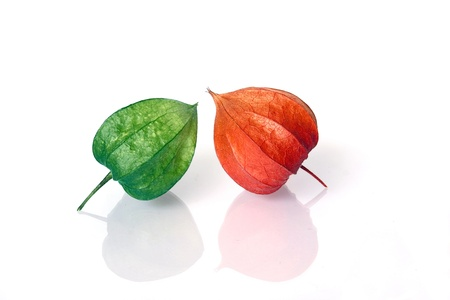 Young Green and Ripe Red Lampions Stock Photo - 14920988