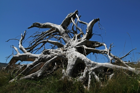 Tree Roots after Storm