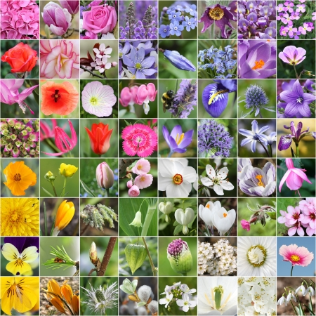 Spring flower collage photo