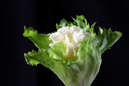 girolle: Rosette of swiss cheese specialty tete de moine wrapped in salad leaf like a cauliflower Stock Photo