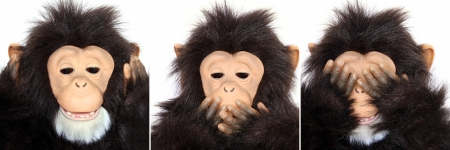 Gorilla Portraits present popular saying  See no evil, hear no evil, speak no evil  Stock Photo