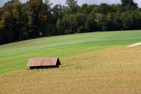 Little barn on the yellow and green fields  Stock Photo