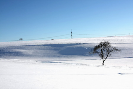 Snow landscape with a lonely tree against sunny sky photo