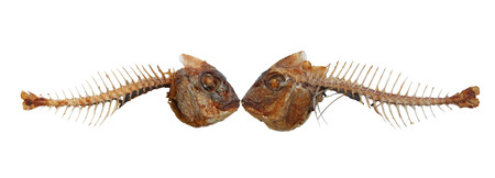 Two kissing fish skeletons photo