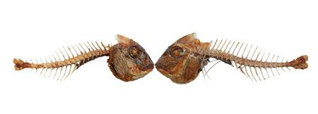 Two kissing fish skeletons