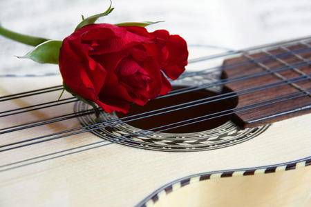 american music: Red rose on a South American Music instrument Charango