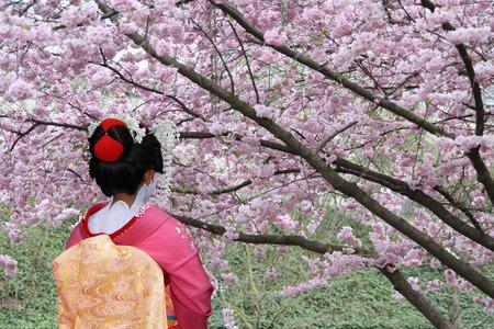 flor de cerezo: Geisha japon�s delante de un �rbol de cerezo en flor Foto de archivo