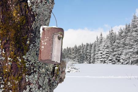 A bird in a stone bird house in winter