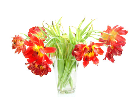 Withered tulips in a vase Stock Photo