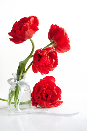 Scarlet tulips in a vase with silver ribbon