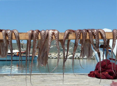 drying octopus at sea-side Greece