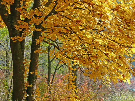 Autumn Trees with Golden Leaves Stock Photo