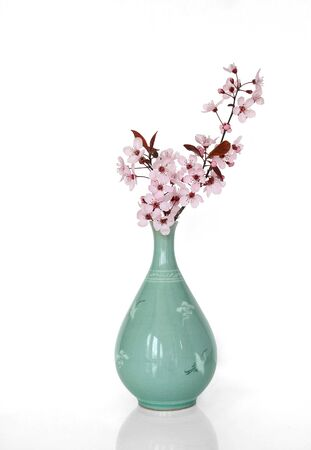 Sakura in a Japanese Vase over white background with reflection