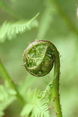 Macro shot of green fern growing in forest