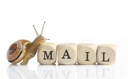 Snail Mail - a little snail is climbing on the blocks