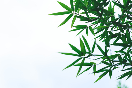 incorruptible: bamboo leaves Stock Photo